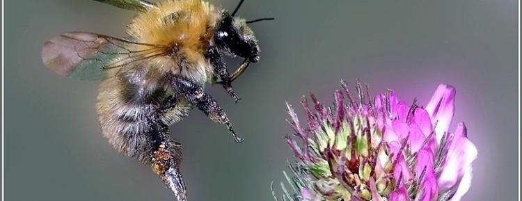 Bilim İnsanlarından 'Arı Gibi Çalışmak' Deyimini Tekrar Düşündürtecek Keşif!