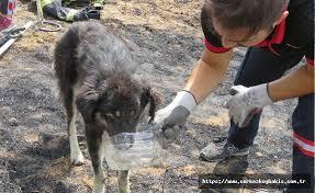 Kuyuya düşen köpek kurtarıldı