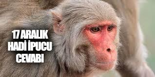 RH Kan Grubunun İsminin Rhesus Maymunundan Gelmesine Sebep Olan Olay
