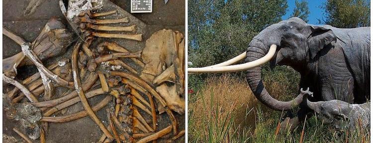Arkeologlar, Oldukça İyi Korunmuş Bir Mamut Dişi Buldu!